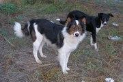 Милые собачки и щеночки ждут Вас