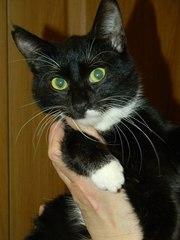 Котики и кошечки в самые добрые руки