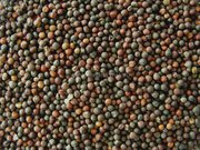 Зерновые и Масличные
