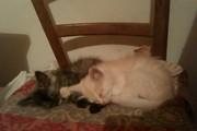Отдам в хорошие руки милых котят!!!!!!!!