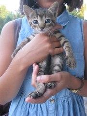 Отдам в добрые руки милых котят