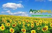 Закупаем зерно по Кировоградской области