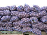 Продам товарный и посадочный картофель