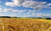 На постоянной основе закупаем зерновые