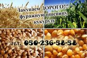 Закупаем проблемную кукурузу,  пшеницу