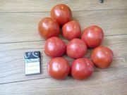 Продам помидор - Багира (грунтовой)