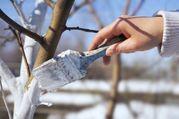 Краска для плодовых деревьев от зайцев