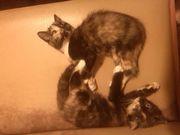 Забавные котята ищут доброго хозяина!