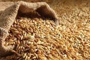куплю зерновые и масличные культуры