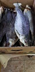 Продам сушеную вяленую рыбу  лещ тарань сом жерех окунь густера судак